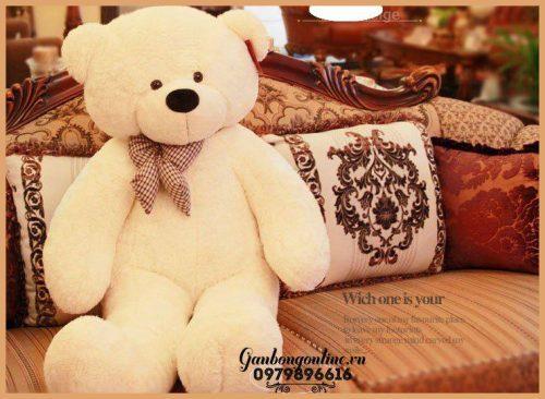 Gấu Bông teddy không rụng lônng
