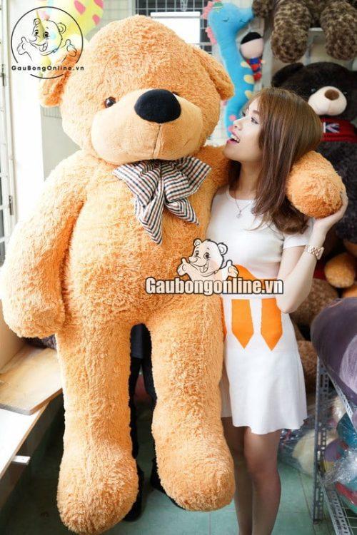 Gấu bông teddy to (1)