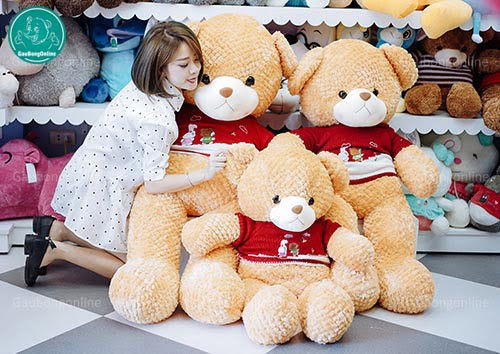 Teddy Lông Thẳng