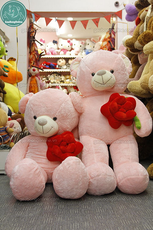 Teddy ôm hoa hồng