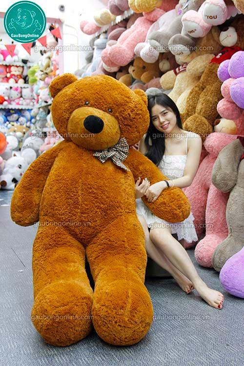 Teddy Nâu Nhập