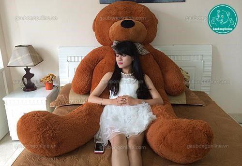 Gấu teddy nâu đại là một người bạn thân thiết bên cạnh