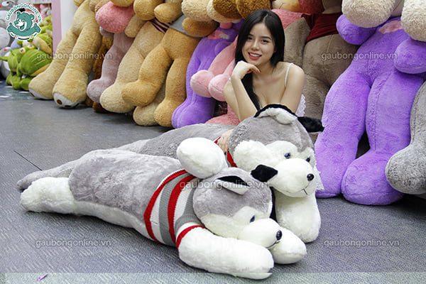 Chó Bông Husky