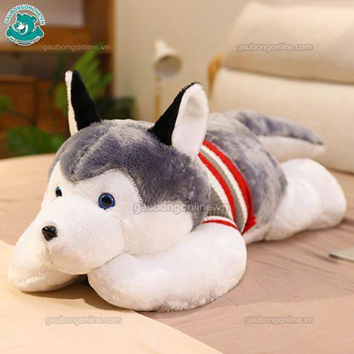 Chó Bông Husky Đại