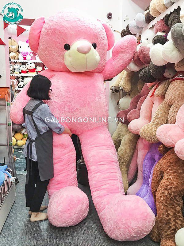 Teddy Hồng 3m5