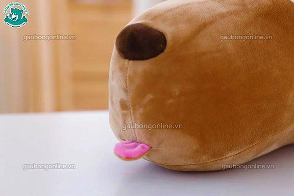 Chó Puco V Bông