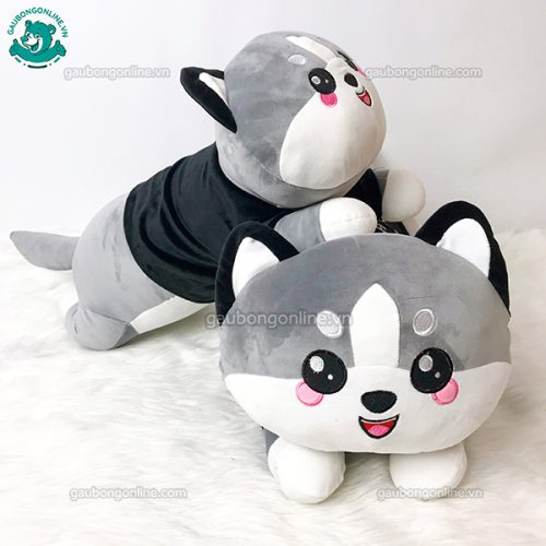 Chó Bông Alaska Kute